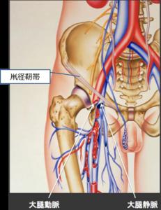 動脈・静脈 画像